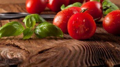 أسماء أفضل أنواع بذور الطماطم وأبرز المشاكل التي تواجه زراعة الطماطم